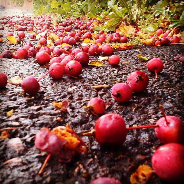 Hösten är på gång...