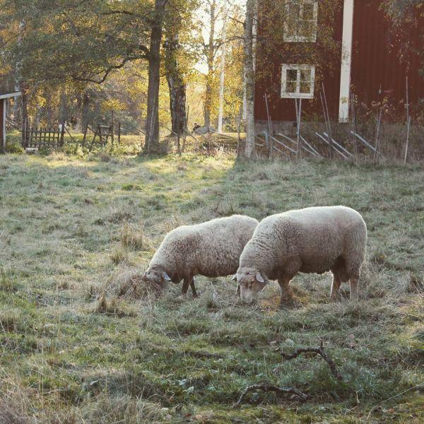 Hembygdsgå Kristinehamn. #visitkristinehamn #hö #ig_varmland_hö